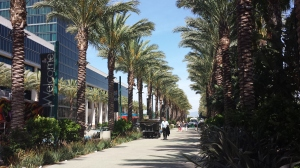 Palm Trees in the conference center area